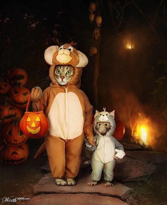 Прикольные картинки на Хэоллоуин кот и мышка