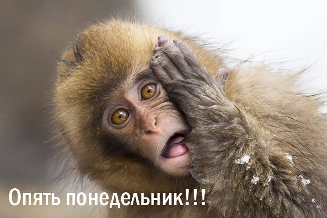 Опять понедельник - картинки смешные с животными