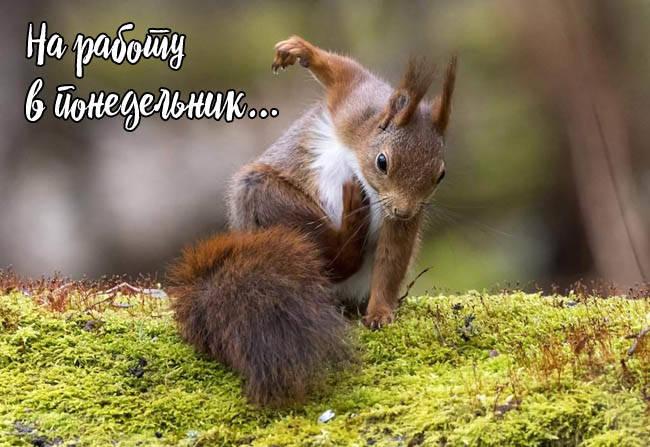 Утро понедельник - прикольные картинки с животными скачать бесплатно
