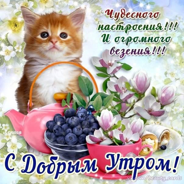С Добрым утром и хорошим днем пожелания картинки