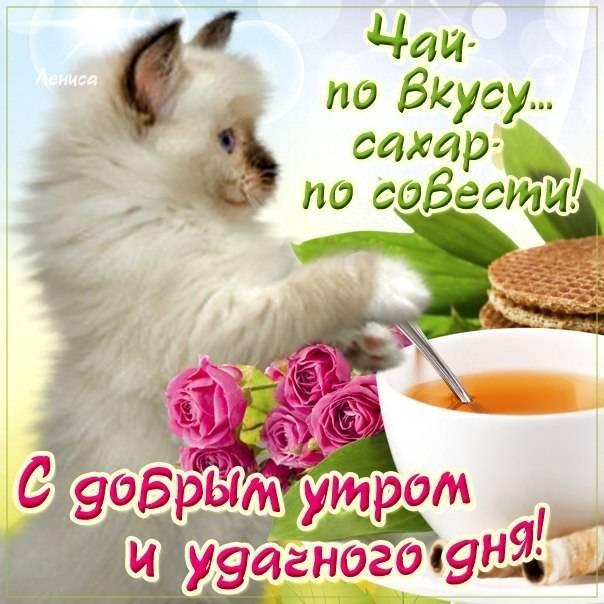 Картинки с пожеланиями доброго утра, хорошего дня и настроения